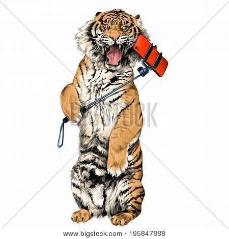 the tiger stands on hind legs with open mouth and makes a selfie sketch vector graphics color picture
