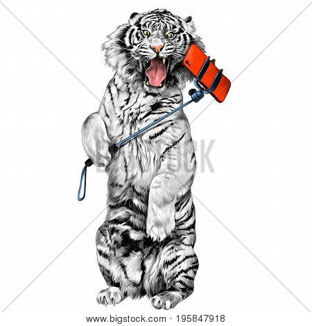 white tiger standing on hind legs with open mouth and makes a selfie sketch vector graphics color picture