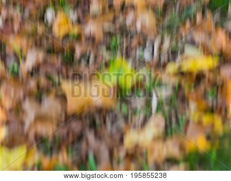 Natural background - autumnal colored blurry chaotic shapes