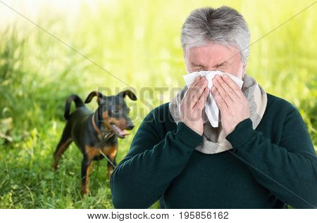 Senior ill man with tissue and pet on background. Concept of allergies to dogs