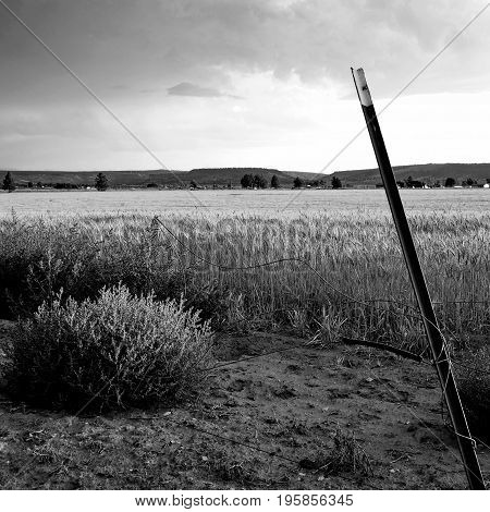 The sun shines through on a wheat field with a leaning fence post during a lull in a rain storm on a summer evening in Central Oregon.