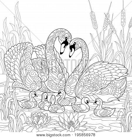 Coloring book page of swan birds family lotus flowers and reed grass. Freehand sketch drawing for adult antistress colouring with doodle and zentangle elements.