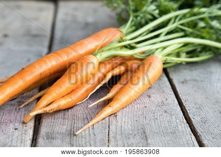Fresh Carrots Bunch On Wood. Bunch Of Fresh Carrots With Green Leaves. Raw Food Ingredients