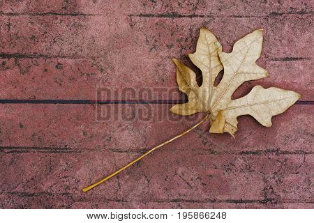 Dry leaves on cement floor, background, leaf, cement