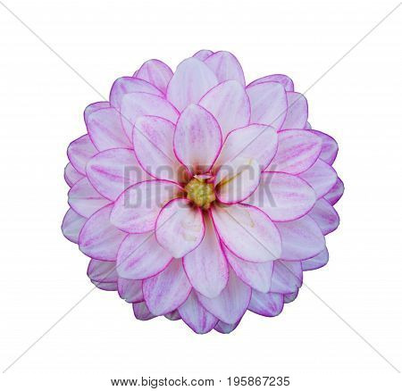 Flower of pink dahlia isolated on white closeup