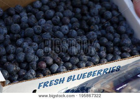 Fresh Crisp Blue Berries in a box at a farmer's market