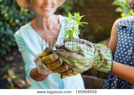 Midsection of grandmother and granddaughter holding seedling in backyard