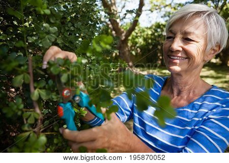 Smiling senior woman trimming plants with pruning shears at backyard