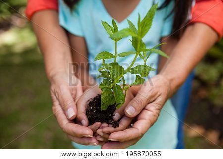 Midsection of grandmother and granddaughter holding seedling at backyard