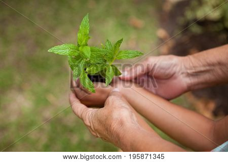 Cropped hands of senior woman and girl holding seedling at backyard