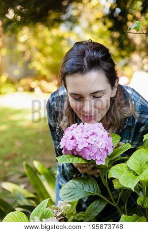 Beautiful woman crouching while smelling at purple hydrangea bunch in backyard