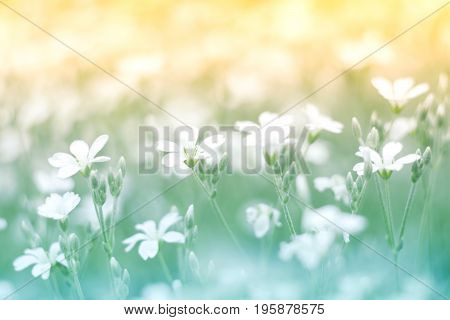 Delicate little white flower on a beautiful background with a gentle tone. Floral background colorful.