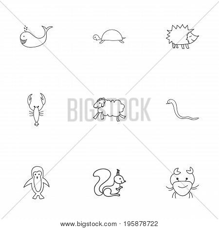 Set Of 9 Editable Zoo Doodles. Includes Symbols Such As Tortoise, Chipmunk, Lobster And More