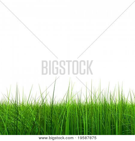 High resolution 3d green grass isolated on a white background