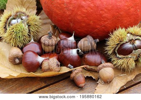 Chestnuts, husk, pumpkin and dead leaves during autumn