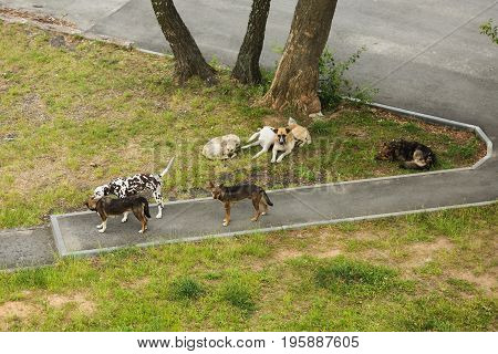 A flock of stray dogs on the street. Wild dogs. Hungry thin dogs in the city. Stray dogs in the courtyard of the house.