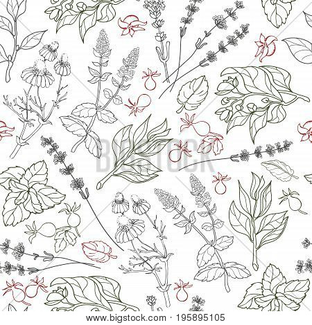 Herbs seamless pattern. Herbal botanical outline sketch. Isolated on white background.  Hand drawn image.