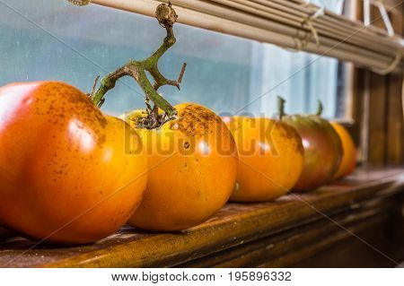Horizontal photo of orange colored tomatoes ripening on a wooden window sill