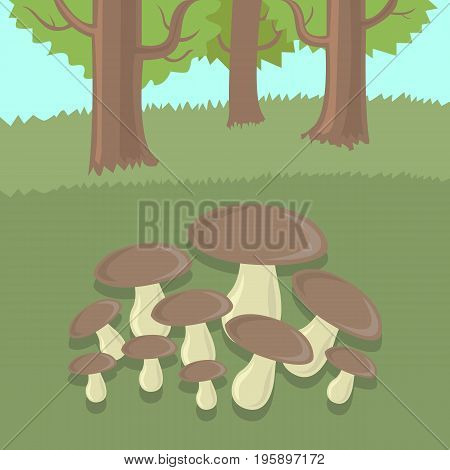 Forest glade with mushrooms in summer day