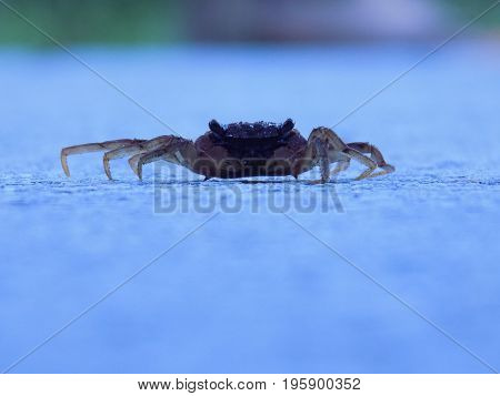 Low profile crab walking down the road