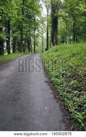 Uphill path in a park with trees France