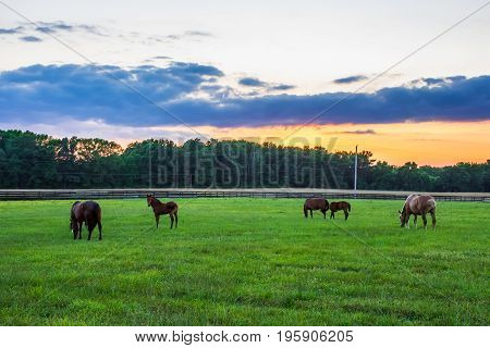 Horses grazing at sunset in this rural scene in Central New Jersey.