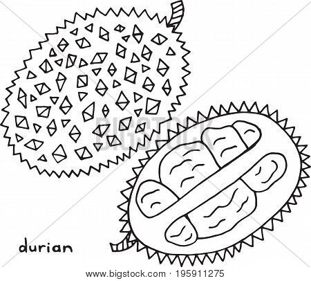 Durian coloring page. Graphic vector black and white art for coloring book for adults. Tropical and exotic fruit line illustration.