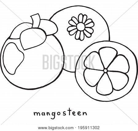 Mangosteen coloring page. Graphic vector black and white art for coloring book for adults. Tropical and exotic fruit line illustration.