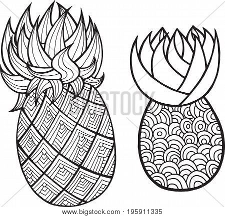 Pineapple and ananas coloring page. Graphic vector black and white art for coloring books for adults. Tropical and exotic fruit line illustration.