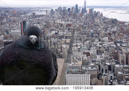 Cloudy view from empire state above New York south side with bird pigeon photobomb