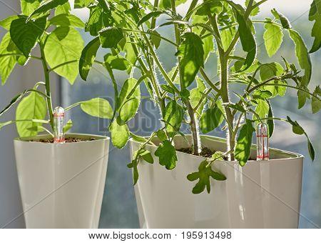 Green plants growing in flower pots on morning sunshine. new technologies. Bonsai