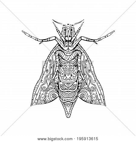 Illustration of an Elephant Hawk Moth done in hand sketch drawing Mandala style.