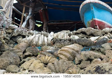 Giant ocean shells outside on the tropical island Nusa Lembongan, Indonesia, Asia, .