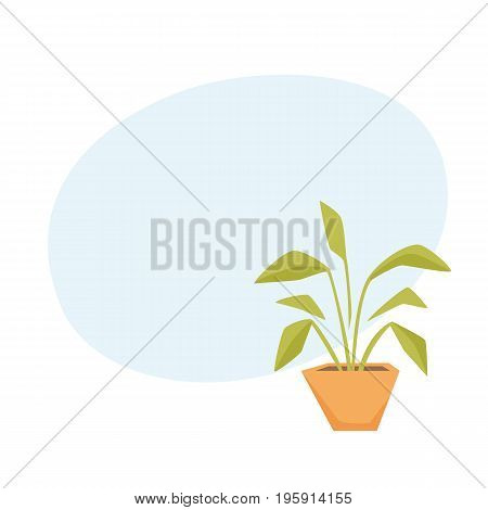 Drimiopsis, Dieffenbachia, Syngonium in pot. Interior home and office houseplant cartoon vector illistration. Flower growth and gardening.