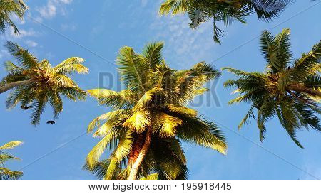 Maldives white sandy beach coconut palm trees on sunny tropical paradise island with aqua blue sky sea ocean 4k