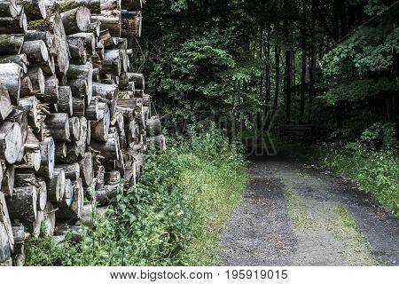 Log pile stack forest wood tire track mud road offroad way puddle landscape background