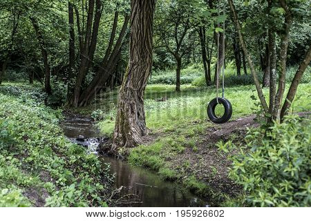 Car tire used as swing on a tree in the forest near a creek stream. Concept photo of childhood, nostalgia, memory , past, life retro, vintage