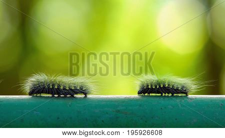 Macro Furry Caterpillar Walking On Steel Bar And Green Blur Background