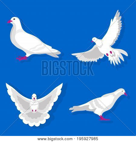 Graceful white pigeon stands, spreads wings and flies isolated vector illustration on blue background. Tender bird that symbolizes peace and freedom. Cartoon dove from different foreshortening.