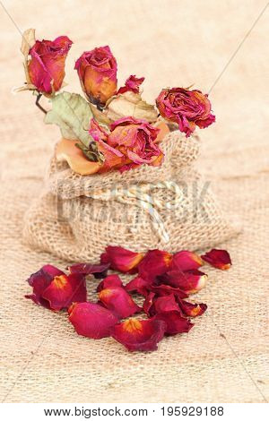 Bouquet of dried withered roses and petals over gunny bag background.