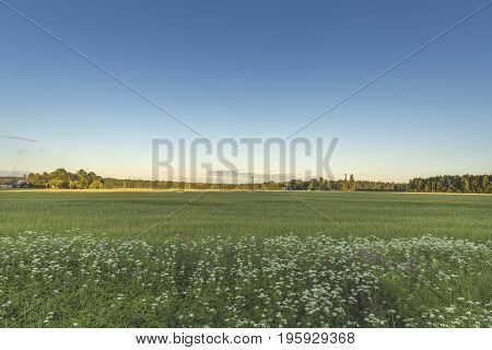 Country side landscape view over meadow with blue sky
