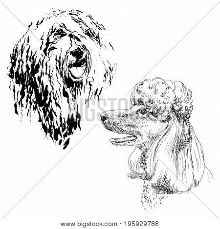 A set of drawings of adult dog poodle. Highly detailed. Hand drawing sketch. Ink, brush and pen. A dog with an open mouth, smiling, she is hot