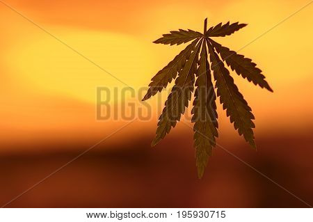 Cannabis Or Marijuana Leaf  In Sunlight. Marijuana Leaf. Medical Cannabis Plant. Graphic Design Elem