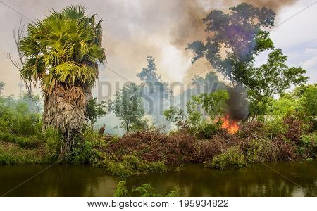 Burning trees in the forest to expand human space causes loss of natural beauty. And air pollution