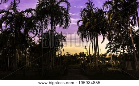 Palm trees in the garden with the evening sky.