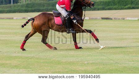 Polo horse player use the mallet hit a polo ball.