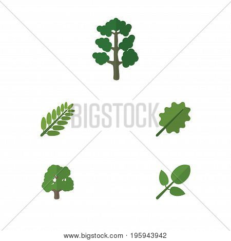 Flat Icon Nature Set Of Forest, Alder, Leaves And Other Vector Objects