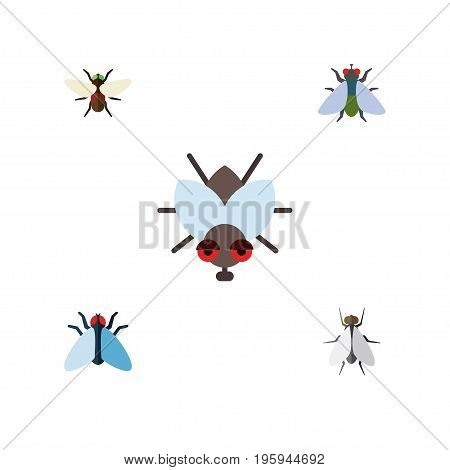 Flat Icon Fly Set Of Hum, Fly, Bluebottle And Other Vector Objects