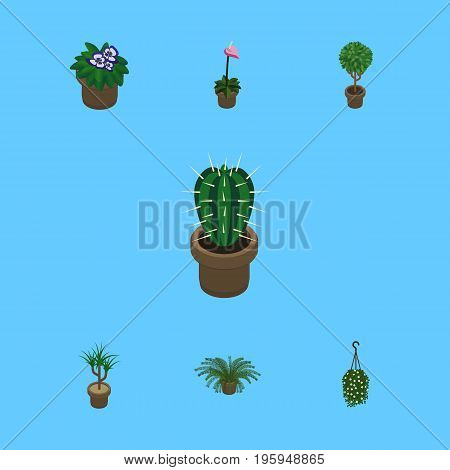 Isometric Flower Set Of Blossom, Grower, Plant And Other Vector Objects