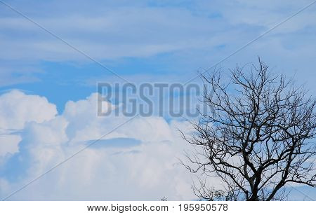 Silhouette of Tree Brunches with sky background
